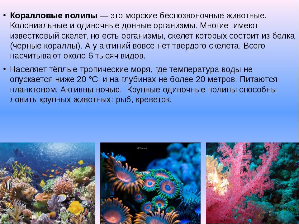 Коралловые полипы— это морские беспозвоночные животные. Колониальные и одино...