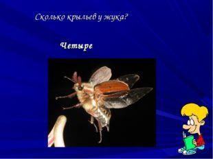 Сколько крыльев у жука? Четыре