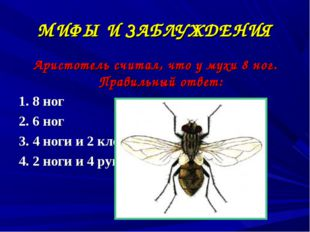 МИФЫ И ЗАБЛУЖДЕНИЯ Аристотель считал, что у мухи 8 ног. Правильный ответ: 1.