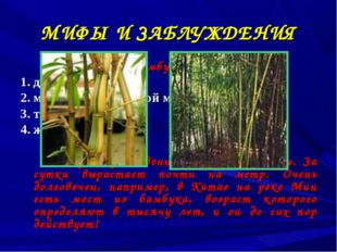 МИФЫ И ЗАБЛУЖДЕНИЯ Бамбук это: 1. дерево 2. минерал с кольцевой моноструктуро
