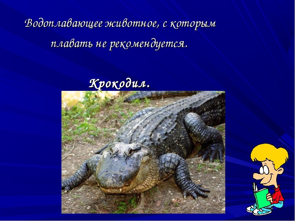 Водоплавающее животное, с которым плавать не рекомендуется. Крокодил.