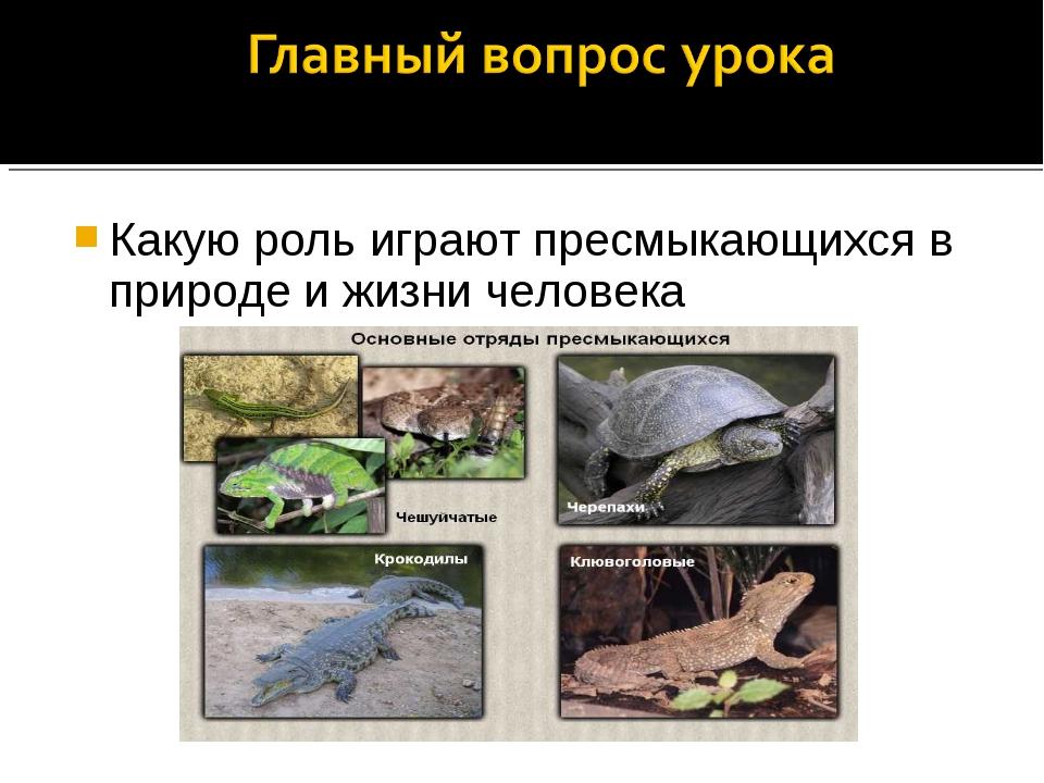 Какую роль играют пресмыкающихся в природе и жизни человека
