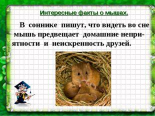 Интересные факты о мышах. В соннике пишут, что видеть во сне мышь предвещает