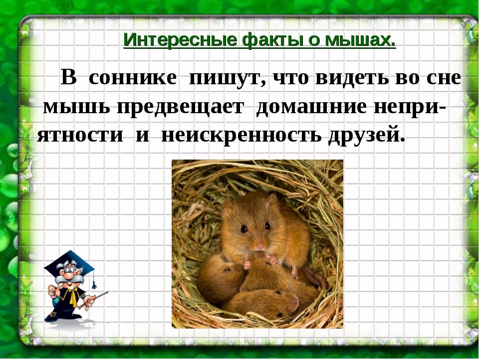 Интересные факты о мышах. В соннике пишут, что видеть во сне мышь предвещает...