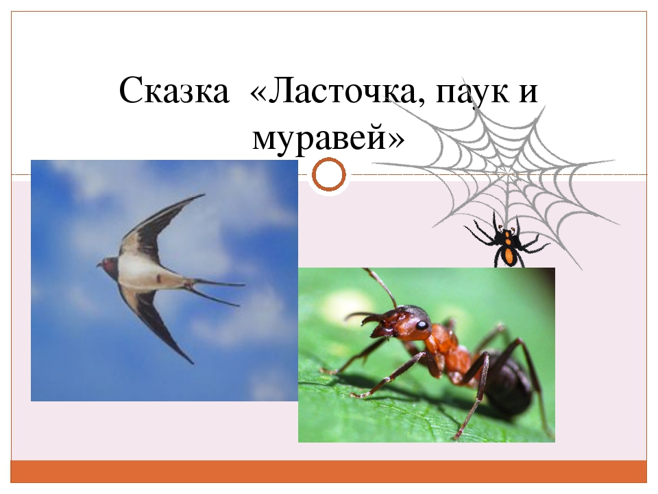 Сказка «Ласточка, паук и муравей»