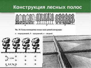 Конструкция лесных полос