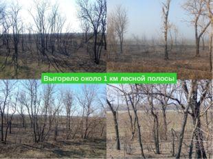 Выгорело около 1 км лесной полосы