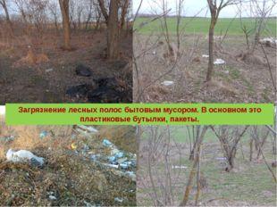 Загрязнение лесных полос бытовым мусором. В основном это пластиковые бутылки