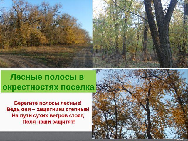 Лесные полосы в окрестностях поселка Берегите полосы лесные! Ведь они – защит...