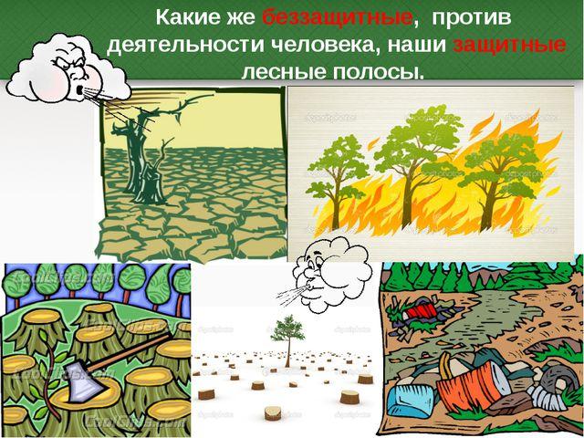 Какие же беззащитные, против деятельности человека, наши защитные лесные поло...