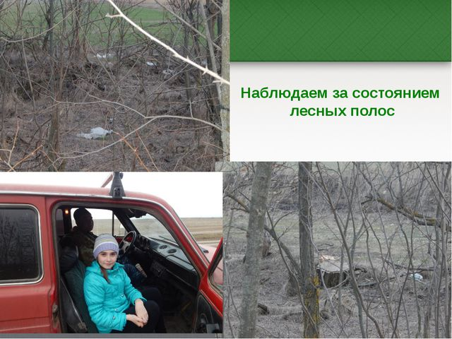 Наблюдаем за состоянием лесных полос