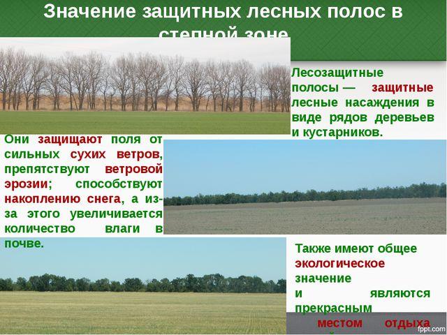 Значение защитных лесных полос в степной зоне Лесозащитные полосы— защитные...