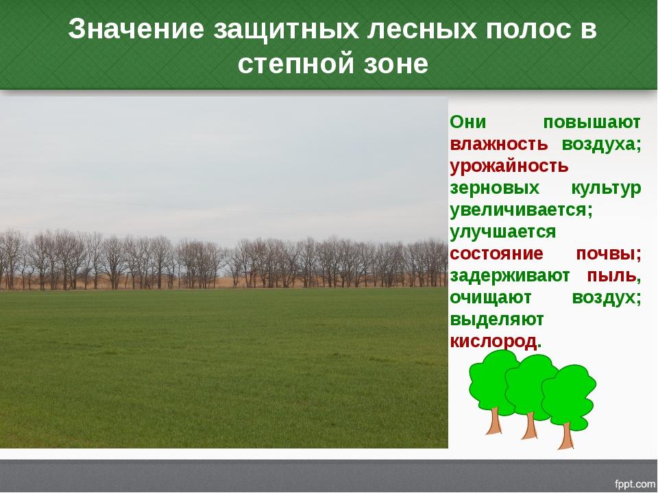 Значение защитных лесных полос в степной зоне Они повышают влажность воздуха;...