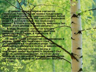 С давних времён берёза считается символом России. Разве можно представить се