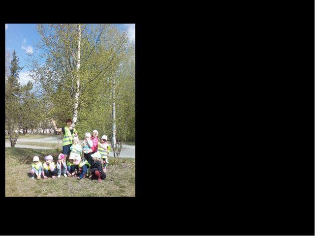 МДОУ ЦРР детский сад «Росинка» Качканар, 2014год Здравствуй дерево проект Акб...