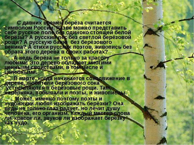 С давних времён берёза считается символом России. Разве можно представить се...