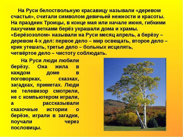 На Руси белоствольную красавицу называли «деревом счастья», считали символом...