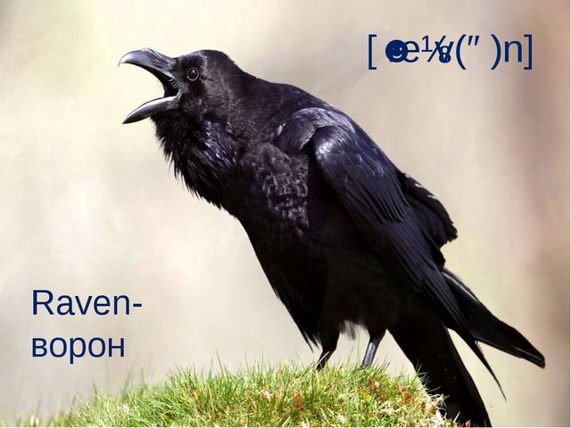 [ˈreɪv(ə)n] Raven- ворон