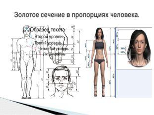 Золотое сечение в пропорциях человека.