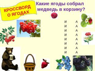 КРОССВОРД О ЯГОДАХ Какие ягоды собрал медведь в корзину? ИА ИА