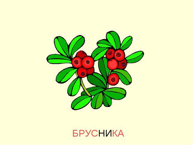 БРУСНИКА