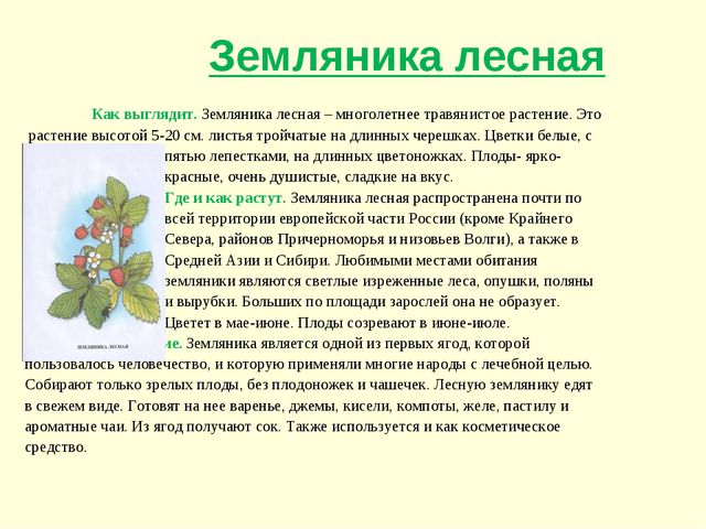Как выглядит. Земляника лесная – многолетнее травянистое растение. Это расте...