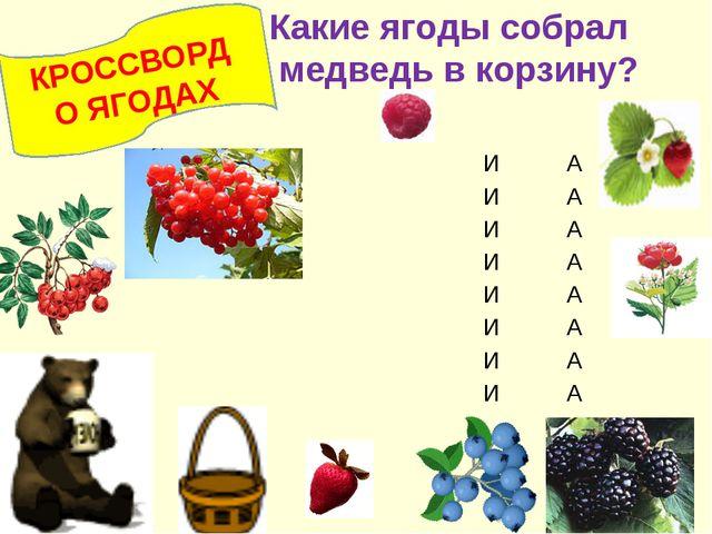 КРОССВОРД О ЯГОДАХ Какие ягоды собрал медведь в корзину? ИА ИА...