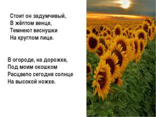 Стоит он задумчивый, В жёлтом венце, Темнеют веснушки На круглом лице. В огор