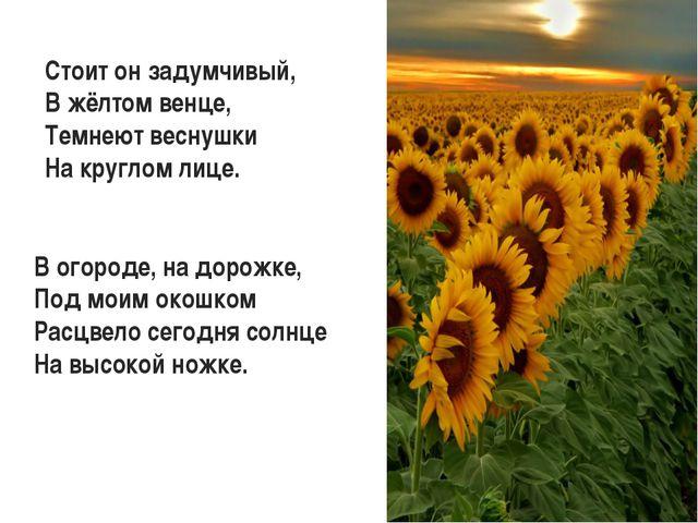 Стоит он задумчивый, В жёлтом венце, Темнеют веснушки На круглом лице. В огор...