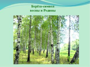 Берёза-символ весны и Родины