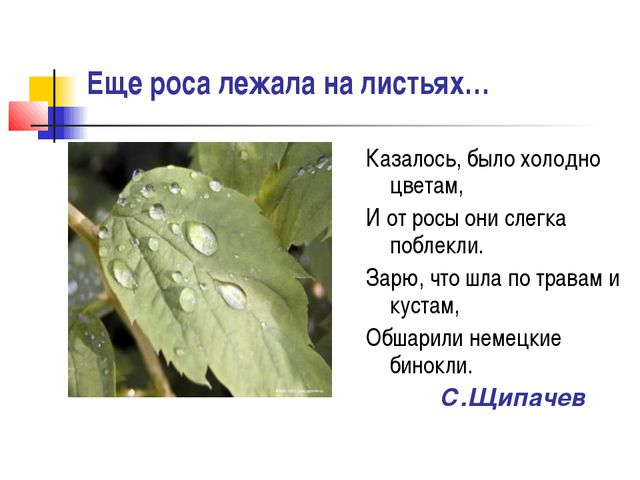 Еще роса лежала на листьях… Казалось, было холодно цветам, И от росы они слег...