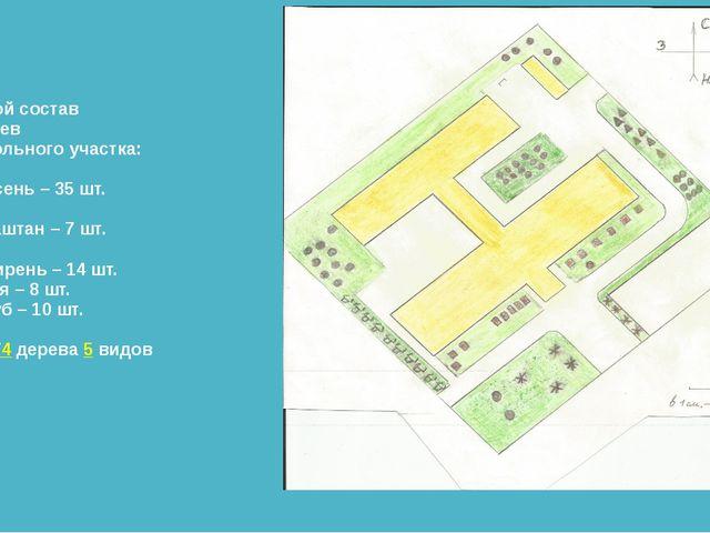 Видовой состав деревьев пришкольного участка: Ясень – 35 шт. Каштан – 7 шт. С...