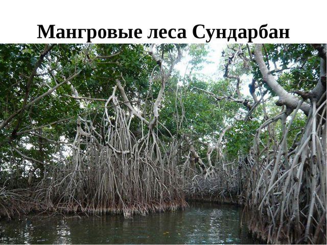 Мангровые леса Сундарбан