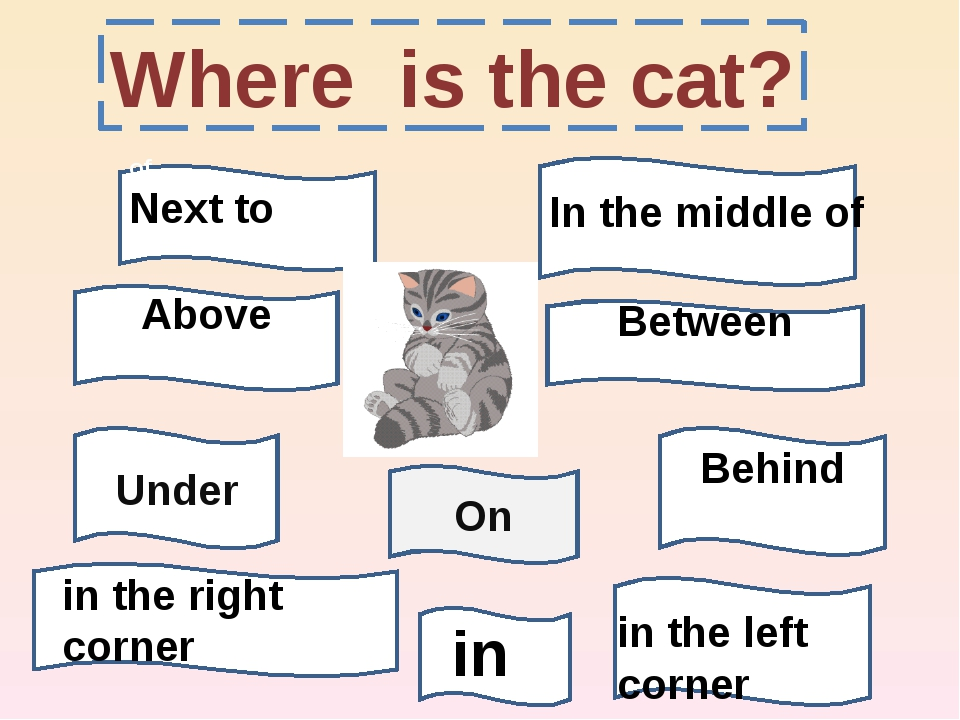 Where is the cat? On of Next to Above Between Under Behind in the right corne...
