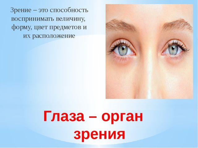 Глаза – орган зрения Зрение – это способность воспринимать величину, форму, ц...
