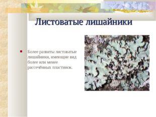 Листоватые лишайники Более pазвиты листоватые лишайники, имеющие вид более ил