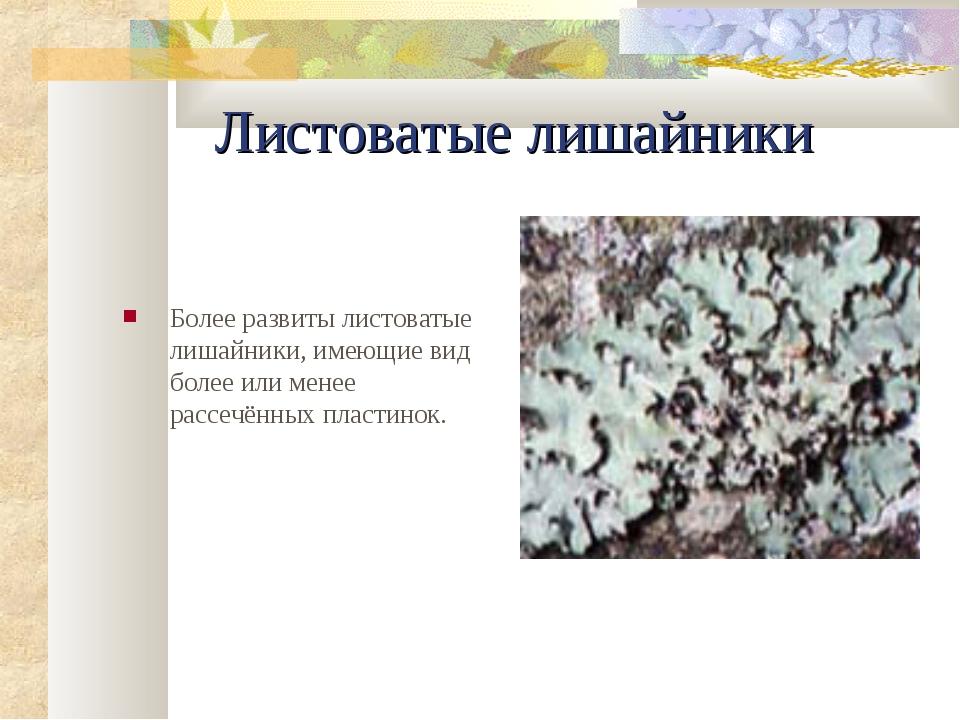 Листоватые лишайники Более pазвиты листоватые лишайники, имеющие вид более ил...