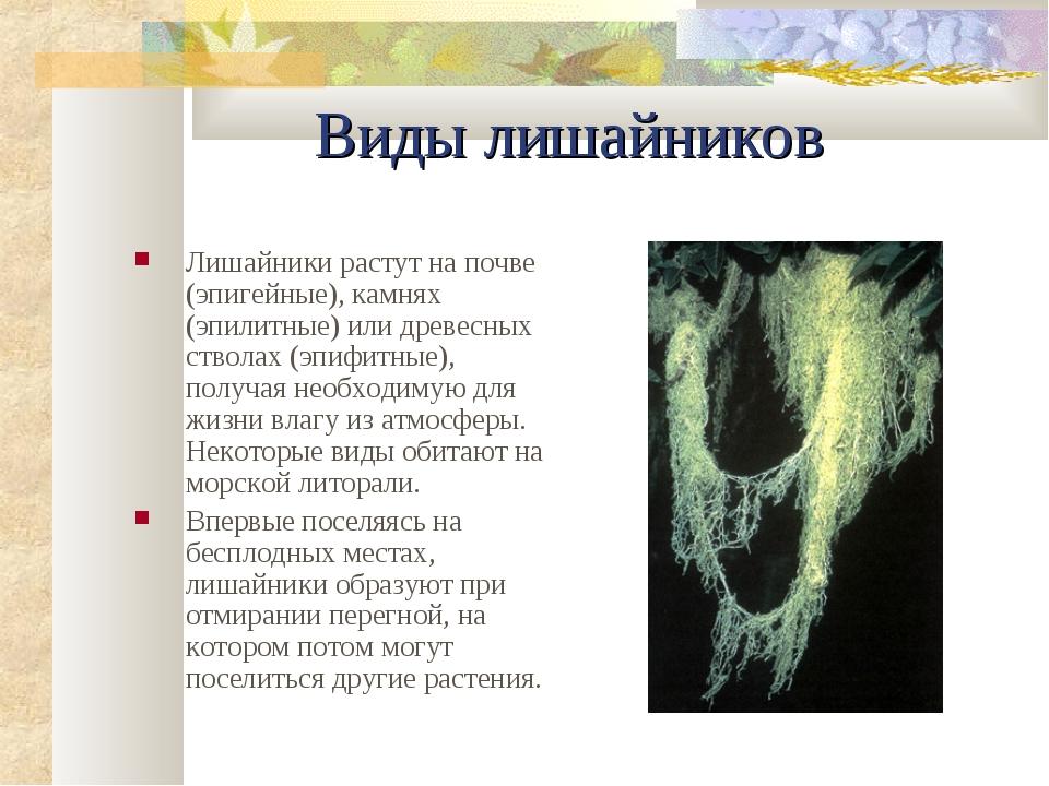 Виды лишайников Лишайники растут на почве (эпигейные), камнях (эпилитные) или...