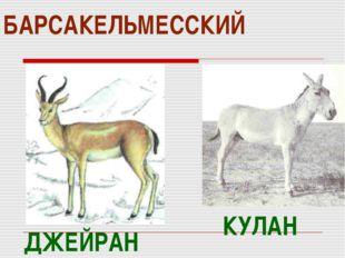 БАРСАКЕЛЬМЕССКИЙ КУЛАН ДЖЕЙРАН