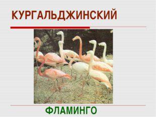 КУРГАЛЬДЖИНСКИЙ ФЛАМИНГО