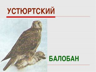 УСТЮРТСКИЙ БАЛОБАН