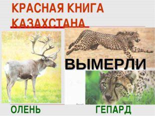 КРАСНАЯ КНИГА КАЗАХСТАНА ГЕПАРД ОЛЕНЬ ВЫМЕРЛИ