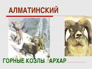АЛМАТИНСКИЙ ГОРНЫЕ КОЗЛЫ АРХАР
