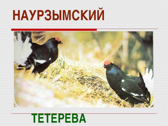НАУРЗЫМСКИЙ ТЕТЕРЕВА