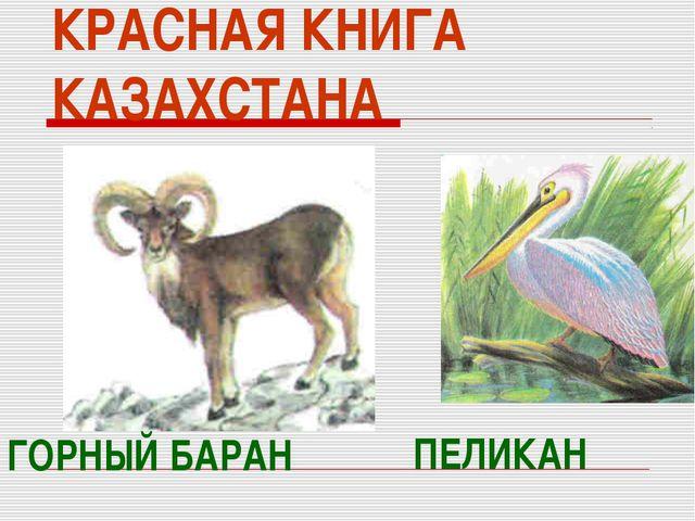 КРАСНАЯ КНИГА КАЗАХСТАНА ГОРНЫЙ БАРАН ПЕЛИКАН