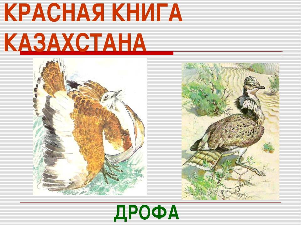 КРАСНАЯ КНИГА КАЗАХСТАНА ДРОФА