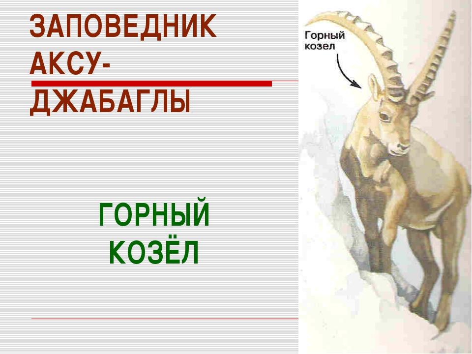 ЗАПОВЕДНИК АКСУ- ДЖАБАГЛЫ ГОРНЫЙ КОЗЁЛ
