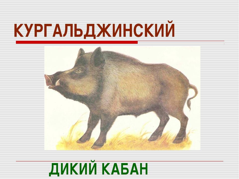 КУРГАЛЬДЖИНСКИЙ ДИКИЙ КАБАН