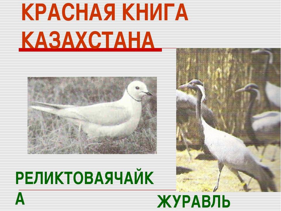КРАСНАЯ КНИГА КАЗАХСТАНА РЕЛИКТОВАЯЧАЙКА ЖУРАВЛЬ