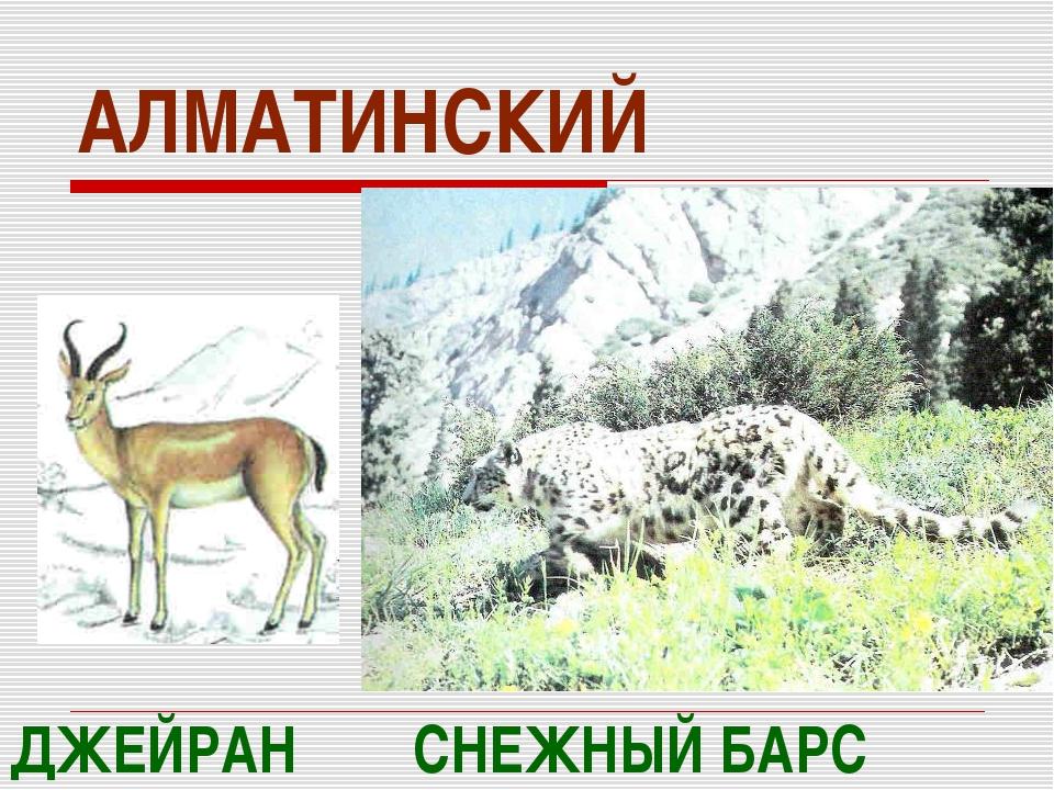 АЛМАТИНСКИЙ СНЕЖНЫЙ БАРС ДЖЕЙРАН